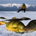 Зимняя рыбалка на Байкале 2015.