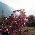 Большой Алтай. Тур на майские праздники.