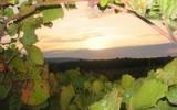 Вид из виноградника